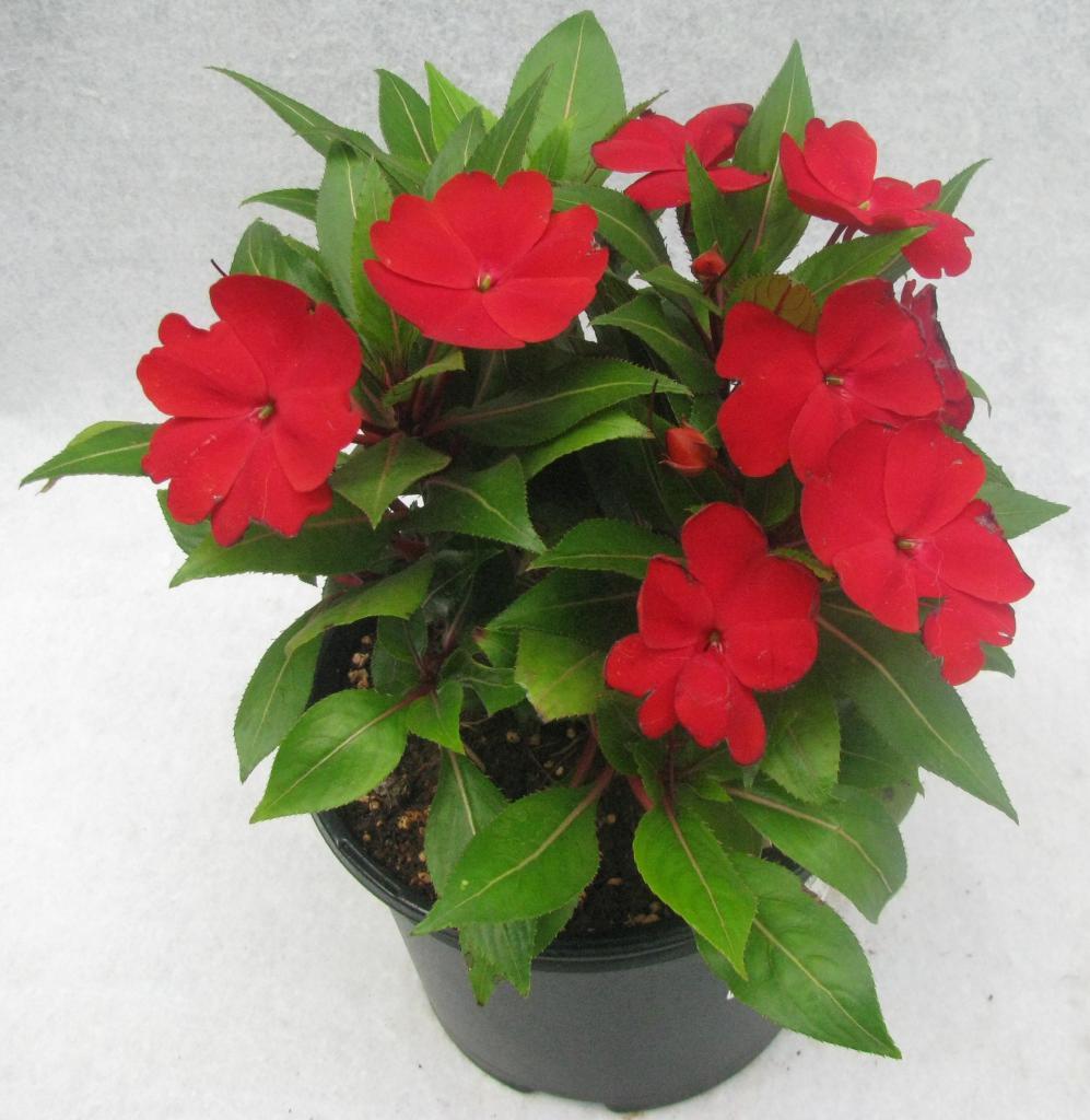 продаже неприхотливые домашние растения фото и названия персонажей