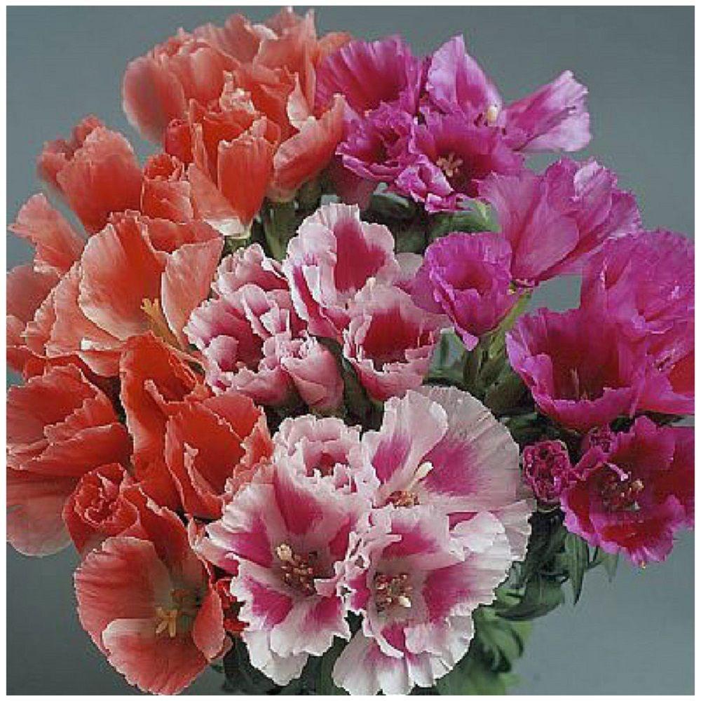 Букет из цветов годеции