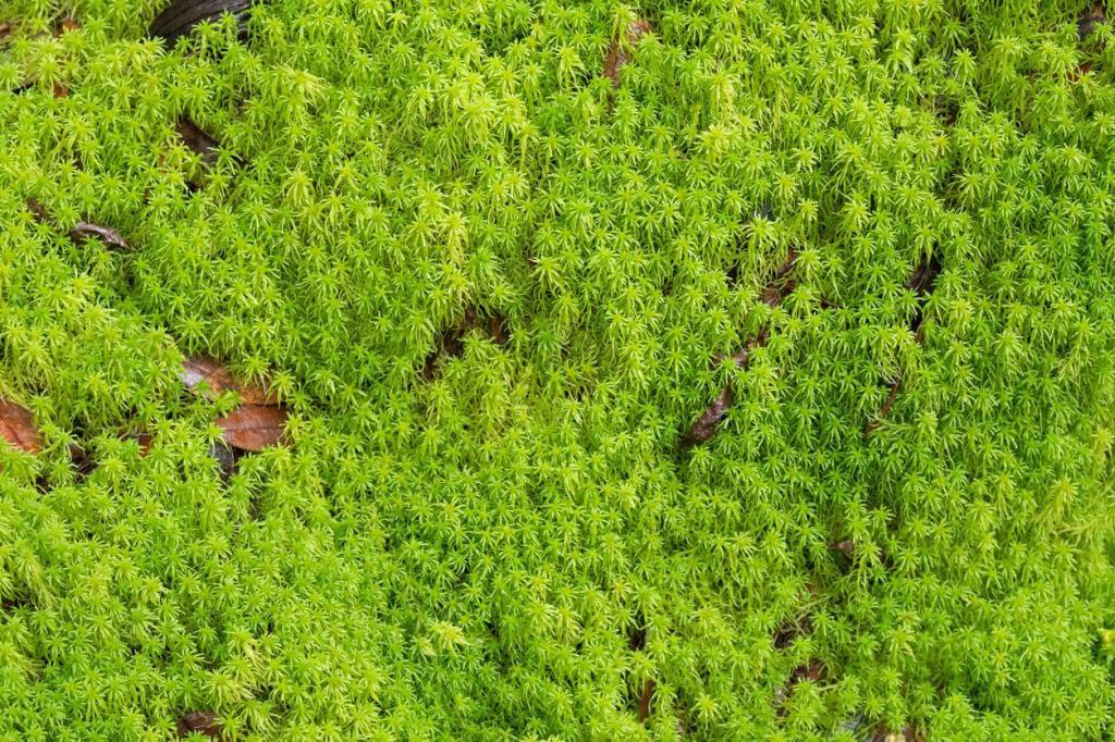 Зеленый ковер из сфагнума