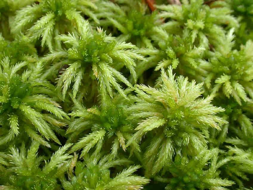 Как выглядит мох