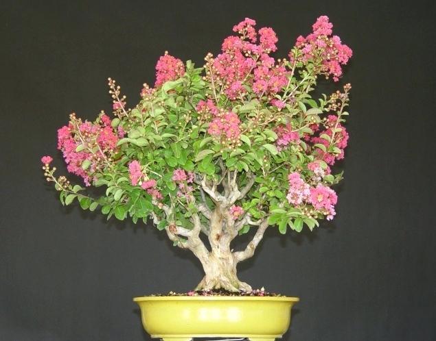 розовое соцветие
