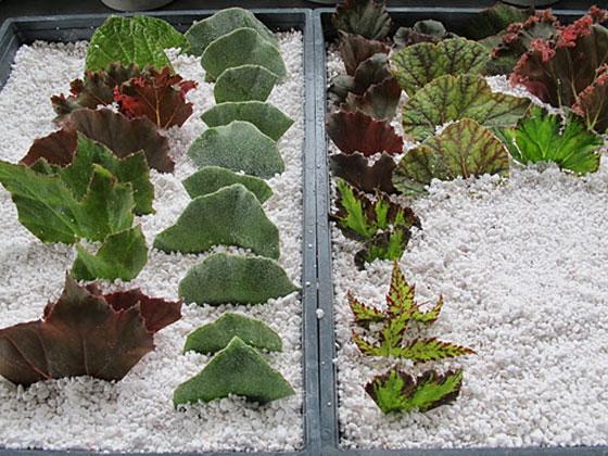 что такое перлит для растений