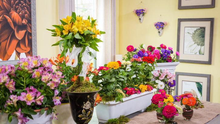 Как правильно подкармливать домашние цветы