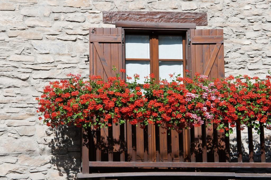 Цветы на балконе солнечная сторона