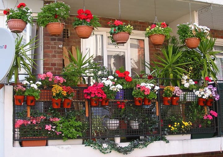 Цветы на балконе зимой
