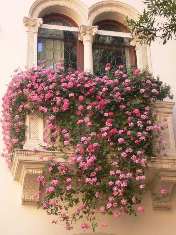 Какие цветы на балконе