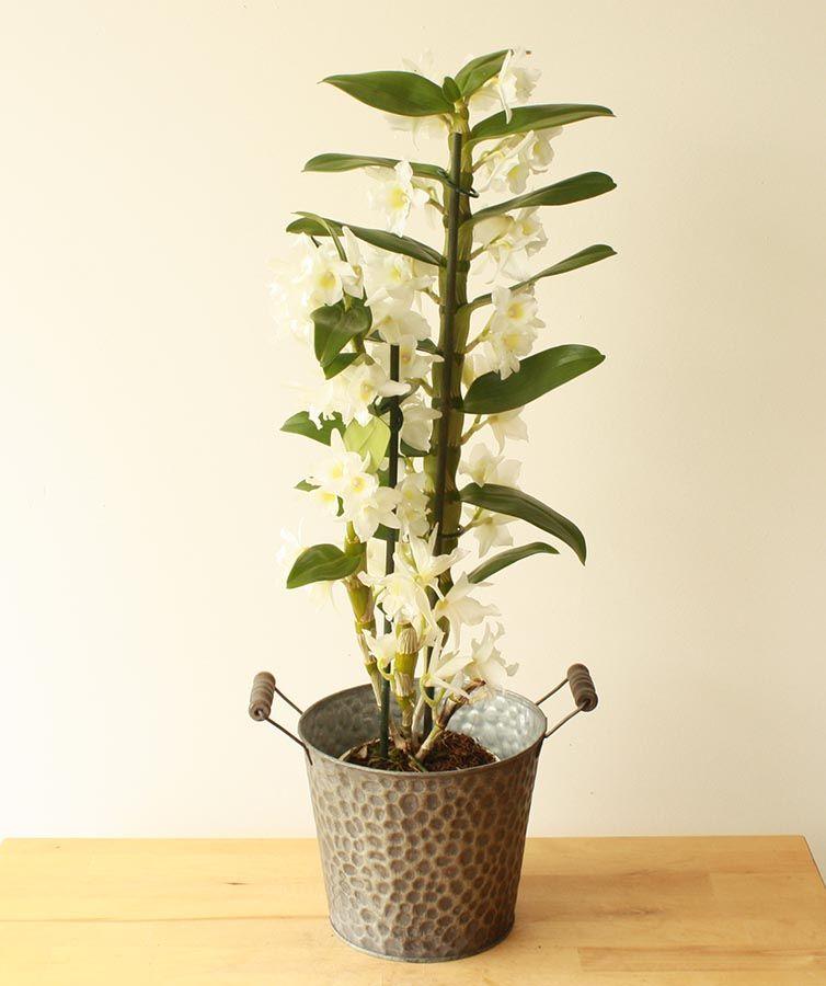 У орхидеи загнивают корни что делать