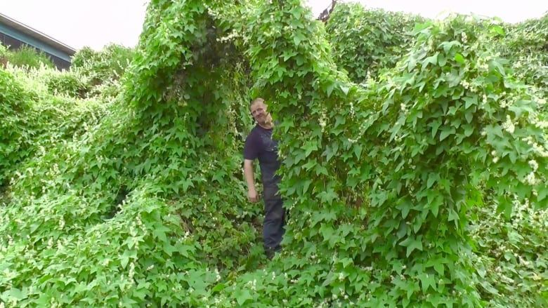арка из растений