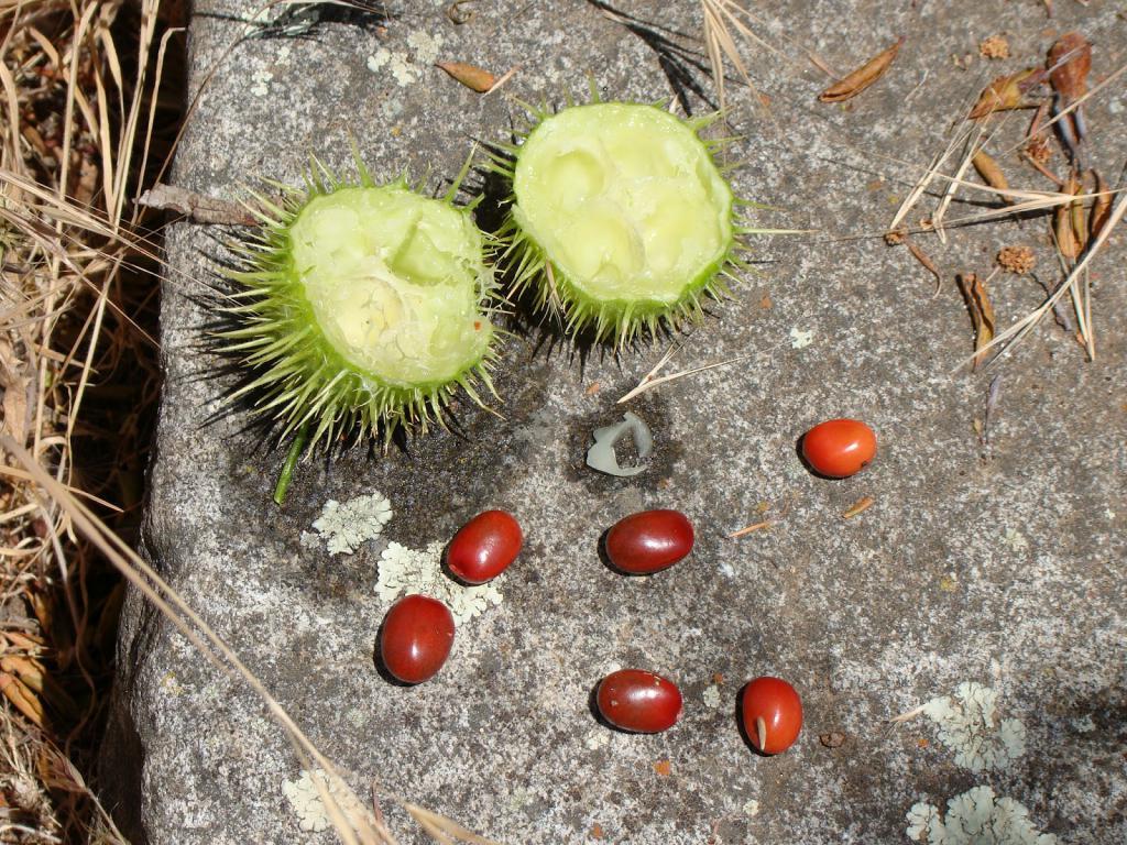 зрелое семя