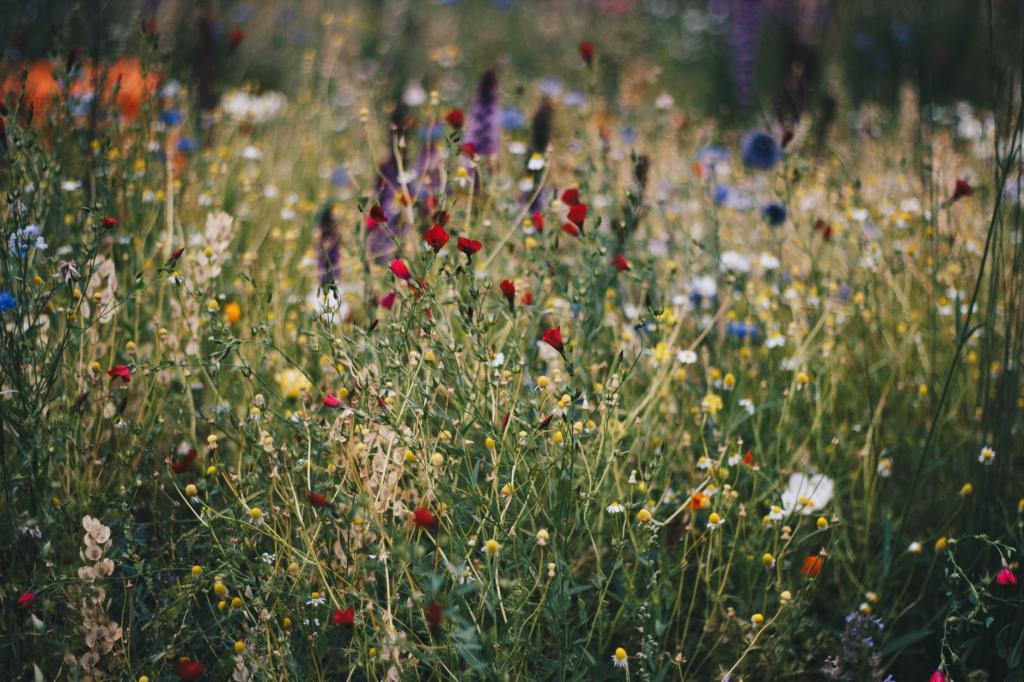 Самые красивые полевые цветы в мире (МНОГО ФОТО)