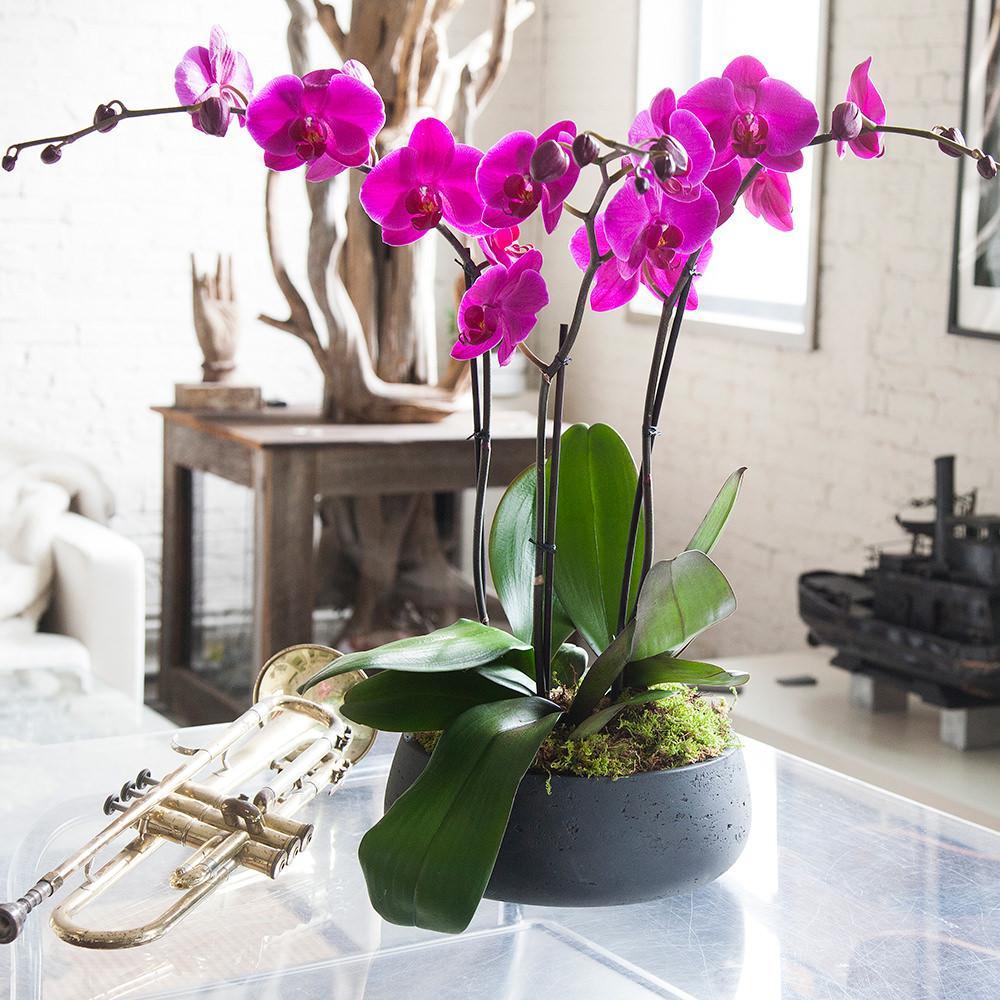 картинки орхидеи уход и размножение в домашних условиях фото место, чистый воздух