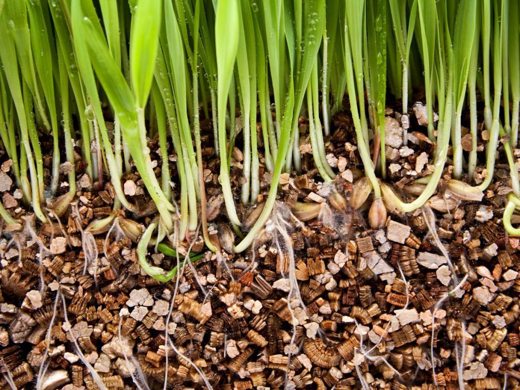 Вермикулит для растений