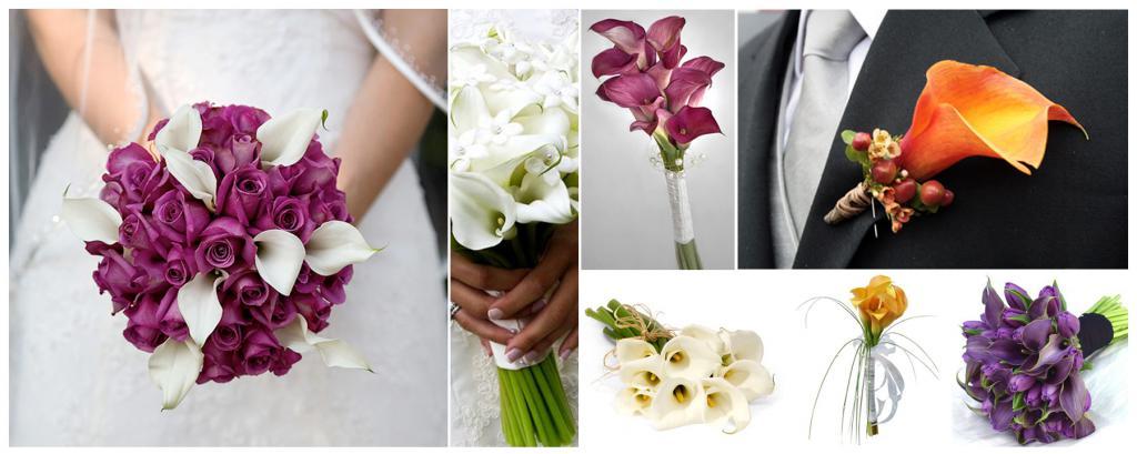 Что символизирует цветок каллы?