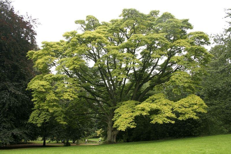 Как выглядит дерево?