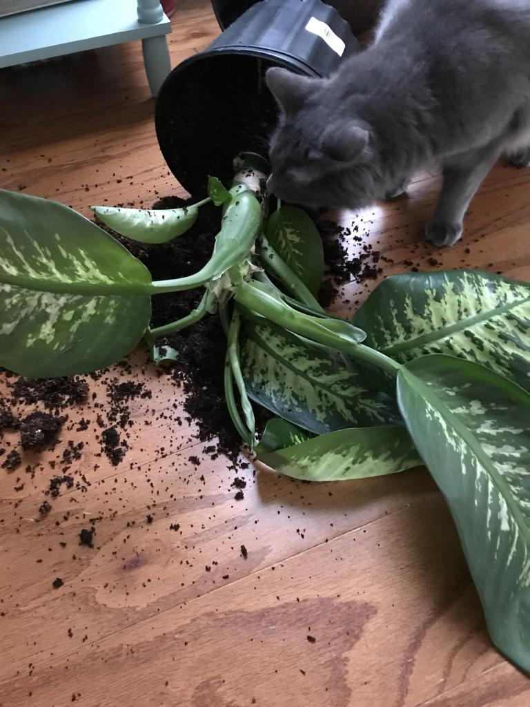 последнее время ядовитые цветы для кошек фото статью, убедитесь, что