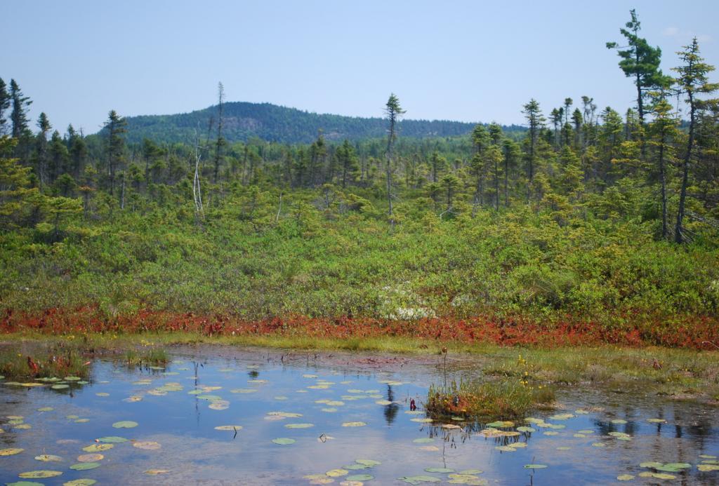 Естественная среда обитания