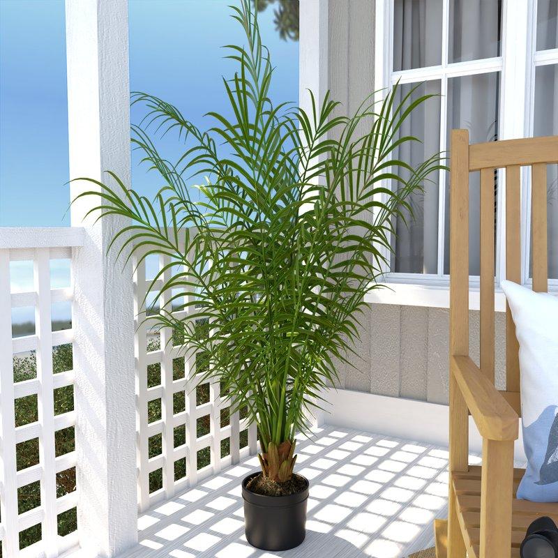 Как выглядит комнатная пальма