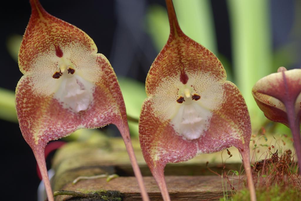 Большие тропические цветы