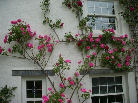 где лучше посадить плетистую розу