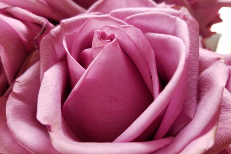 цвета роз что означают