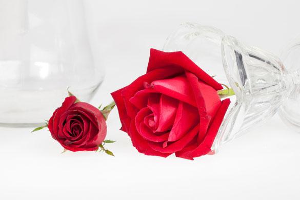 красная роза значение