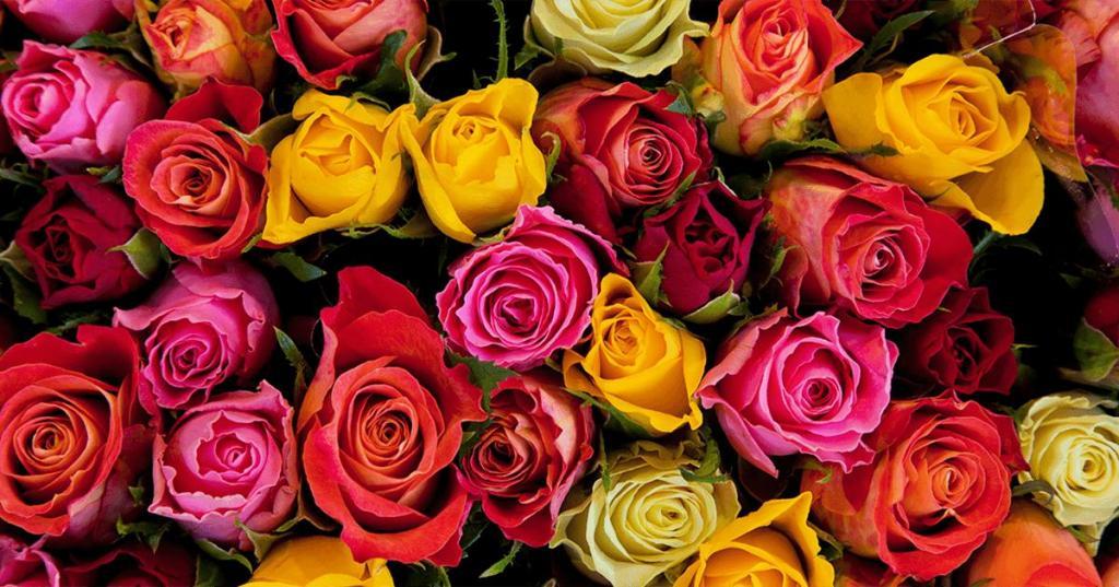 Что означает цвет роз в букете