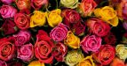 Розы количество и цвет значение