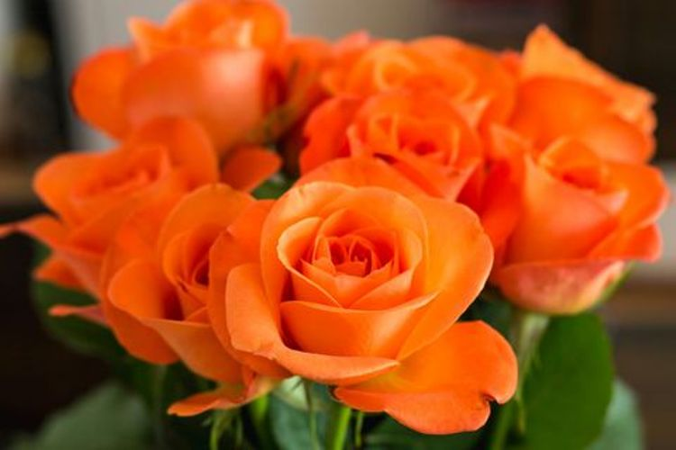 значение роз оранжевых
