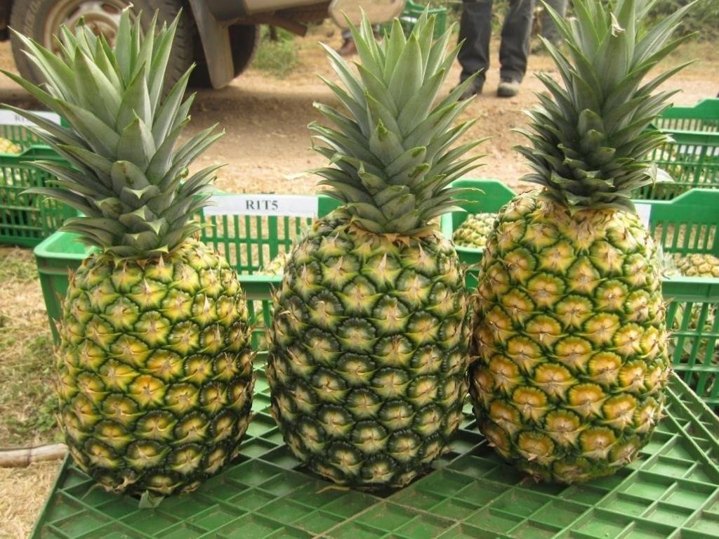 где растут ананасы страны