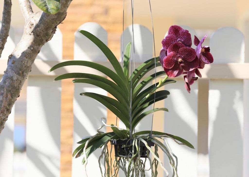 Орхидея на блоке