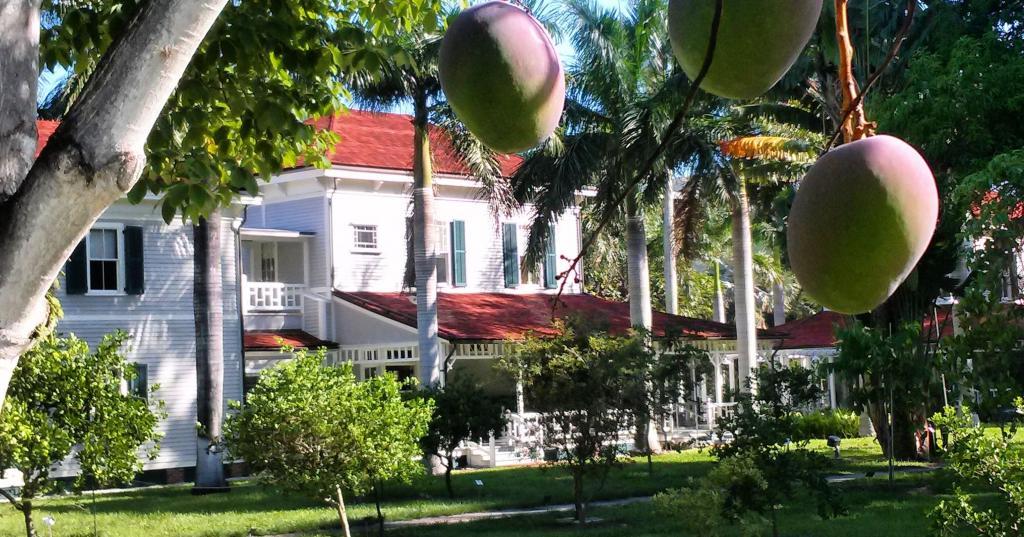 Как вырастить домашнего манго