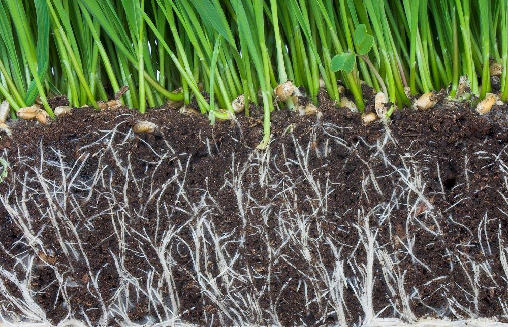 Развитая корневая система
