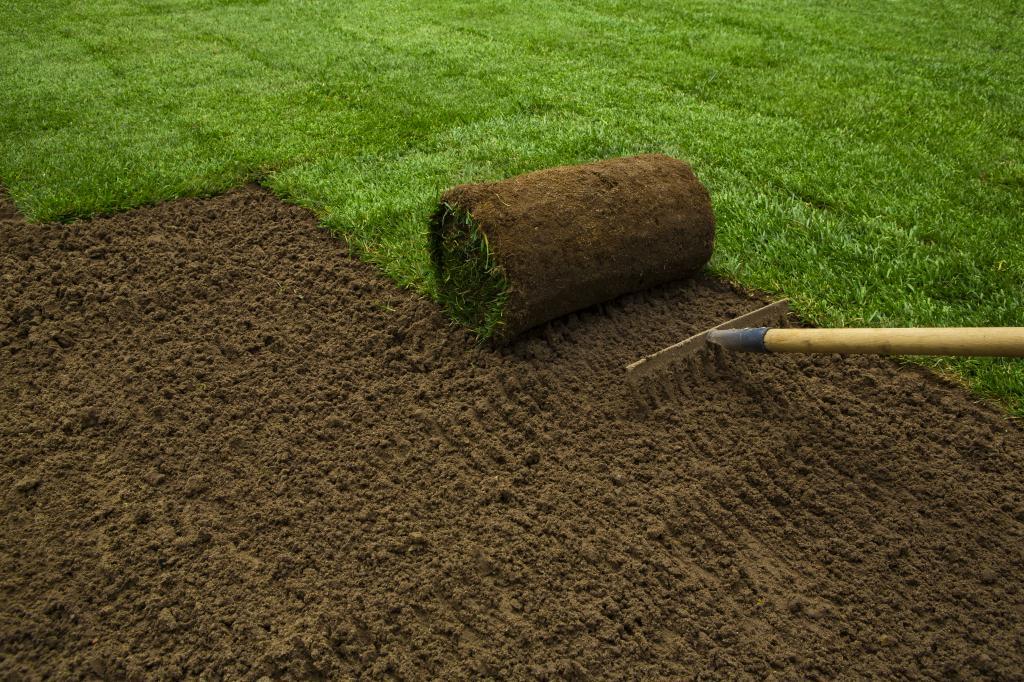 как посеять газонную траву правильно своими руками