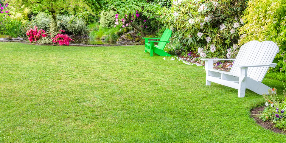 как засеять газон на даче своими руками