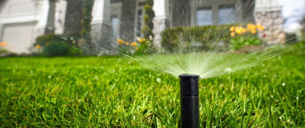 как вырастить траву газонную