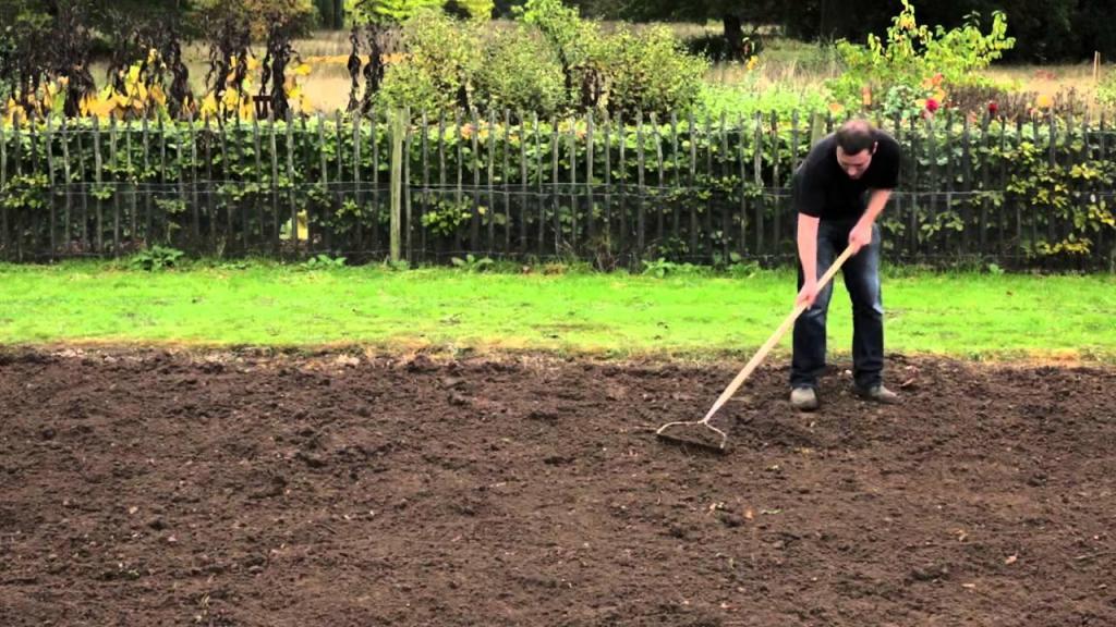 как выращивать газонную траву