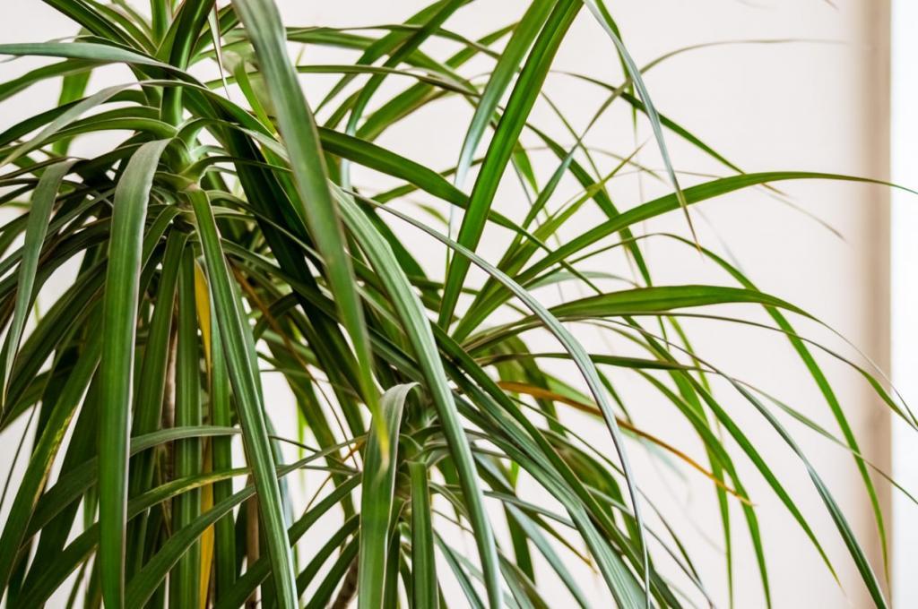 стенах цветы с тонкими длинными листьями фото дань уважения преклонения