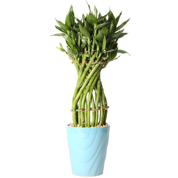 Как красиво посадить бамбук