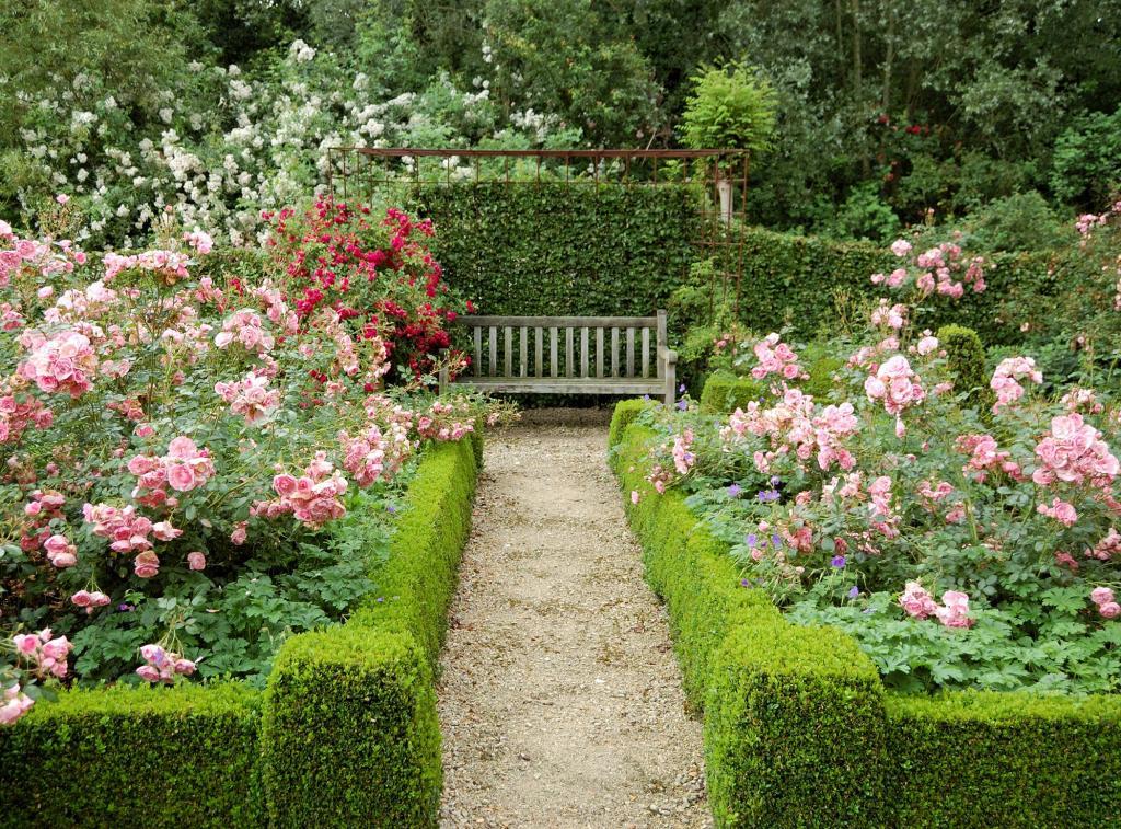 Розы на даче и в саду фото также